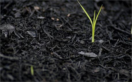 Young sprout springing forth from ground